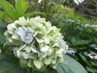 花はじんわり - アオモジノキモチ