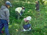 猛暑の中、鎌倉高生3人下草刈りに挑戦8月六国見山定例手入れ - 北鎌倉湧水ネットワーク