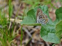 草原の風に翔ぶ蝶を追って(その5) - 不思議の森の迷い人