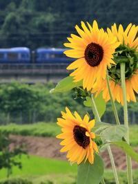 ひまわり少し - 今日も丹後鉄道