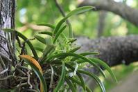 風蘭 朝顔たち 小さいひまわり 露草 2 種 - 仏師 金丸悦朗の挑戦