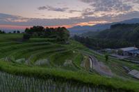 光差す水田 - katsuのヘタッピ風景