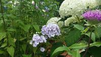 7月16日の庭 - 今から・花