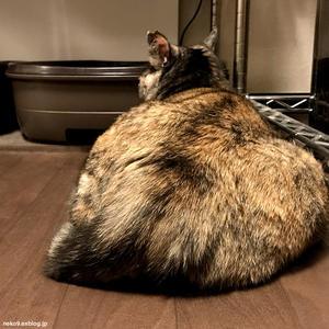 ねらうおしりをねらう - 賃貸ネコ暮らし|賃貸住宅でネコを室内飼いする工夫