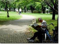 【こ】公園散歩:こうえんさんぽ - ネコニ☆マタタビ