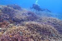 17.7.17 コーラルガーデンで、〆 !! - 沖縄本島 島んちゅガイドの『ダイビング日誌』