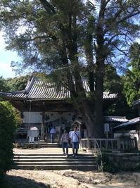 四国第14番 常楽寺(じょうらくじ) - 樹の神様