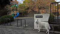 Vol.1209 篠原町表谷公園 - 小太郎の白っぽい世界