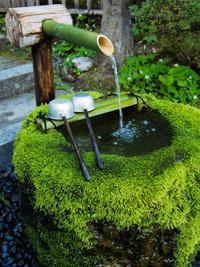 #237 Fresh moss  新苔 - THIS MOMENT