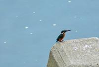 さわやかな朝の浅川 - 西多摩探鳥散歩