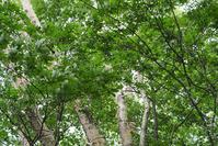 大蔵高丸森林浴 - TOM'S Photo