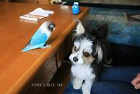 B.B & Chipo* ギャ~オッ!!!!! - FUNKY'S BLUE SKY
