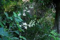 公園で散歩、花やトンボ、アオサギなど - ぶらり散歩 ~四季折々フォト日記~