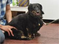 ドッグマッサージ 7/16 - SUPER DOGS blog