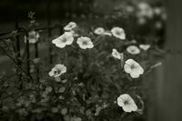 pretty flowers - S w a m p y D o g - my laidback life