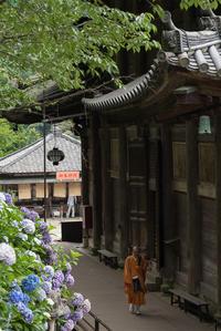 長谷寺 -3- - Photo Terrace