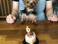 みゅうのお誕生日ケーキ - わんころ日誌
