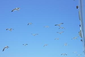 海、ウミネコ、十八鳴浜 -