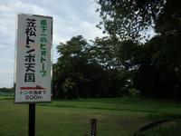 『笠松トンボ天国を歩いて・・・・・』 - 自然風の自然風だより