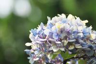 7/16 無事孵る - 「あなたに似た花。」