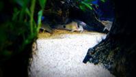 釣りの小話.30【熱帯魚の世界】 - river side