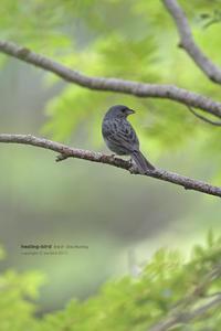 涼しい高原のあちらこちらで - healing-bird