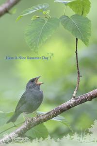 Summer Greetings 2017 - healing-bird