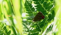 2017 ハイシーズン 県外遠征 - 紀州里山の蝶たち