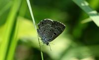 2017 ハイシーズン 県外遠征 その2 - 紀州里山の蝶たち