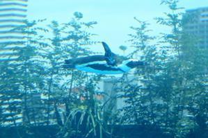 キミは空飛ぶペンギンを見たか?(池袋、サンシャイン水族館) - 旅プラスの日記