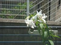 夏の花 - ケチケチ贅沢日記