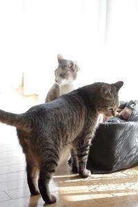 ブロ友さんが猫たちに会いに来てくれました  - きょうだい猫と仲良し暮らし