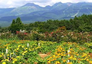 栃木県那須郡那須町「那須フラワーワールドの花と風景」 -