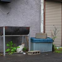 雨の日に猫 - いつもの風景