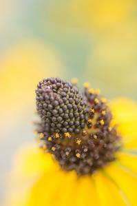 yellow*Mellow - 気ままにお散歩