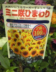 ミニヒマワリ開花! - うまこの天袋