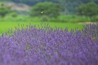 飛ぶ蝶たち - tokoのblog