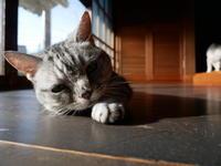 大人の夏休み、続き - ご機嫌元氣 猫の森公式ブログ