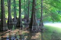 水の森 - Select