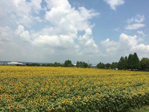 おでかけ|兵庫県 小野市 ひまわりの丘公園へ - 兵庫県田舎暮らし