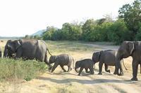スリランカで、ゾ~っとした経験(その13)(ミンネリヤ国立公園) - 旅プラスの日記