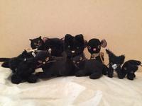 黒猫増えた その2 - りきの毎日