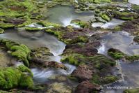 苔むす湿原  - 風の彩り-2