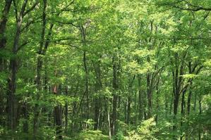 森のホームパーティ&創造療法モニターワークショップ開催のお知らせ - 森のTERRA