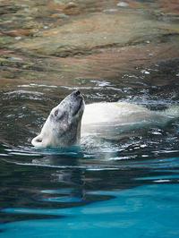 7月19日(水) 熱い夏 - ほのぼの動物写真日記