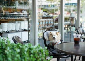 愛犬とのモーニングはDEAN & DELUCA でアボガドトーストを♪ - きれいの瞬間~写真で伝えるstory~