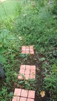 エノコログサ撲滅第三弾 - うちの庭の備忘録 green's garden