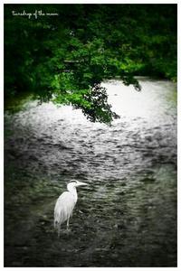 *白川にて・・・* - 心写心癒  ~心の鏡~