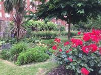 ロンドン発イングリッシュガーデン - 花の自由旋律