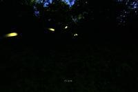 光る足跡 - like a rabbit ~ なんとなく、lonely?